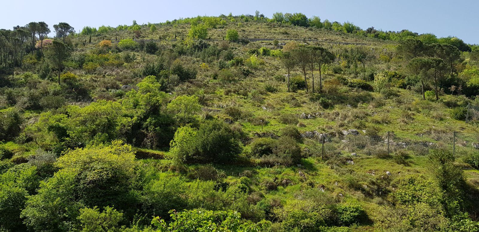 https://www.progettocasa1.it/immagini_immobili/04-05-2018/appartamento-vendita-sonnino-lt-via-borgo-s-antonio-60.jpg