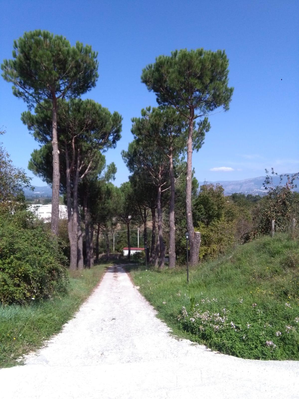 https://www.progettocasa1.it/immagini_immobili/06-06-2019/soluzione-indipendente-affitto-colleferro-roma-via-latina-244-553.jpg