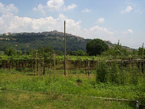 https://www.progettocasa1.it/immagini_immobili/18-04-2017/soluzione-indipendente-vendita-segni-roma-via-carpinetana-ovest-146.jpg