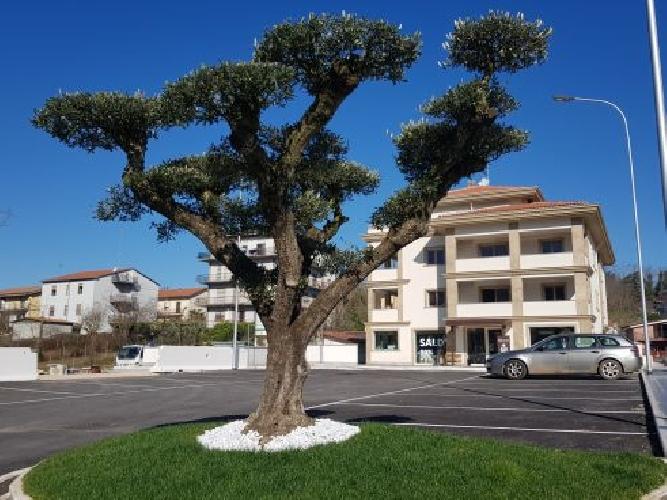 https://www.progettocasa1.it/immagini_immobili/19-05-2021/ufficio-affitto-colleferro-roma-via-dei-pioppi-24-629.jpg