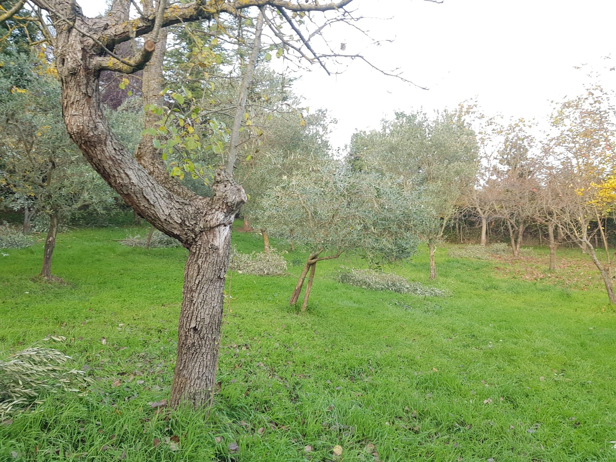 https://www.progettocasa1.it/immagini_immobili/28-01-2021/terreno-vendita-segni-roma-contrada-roffo-658.jpg